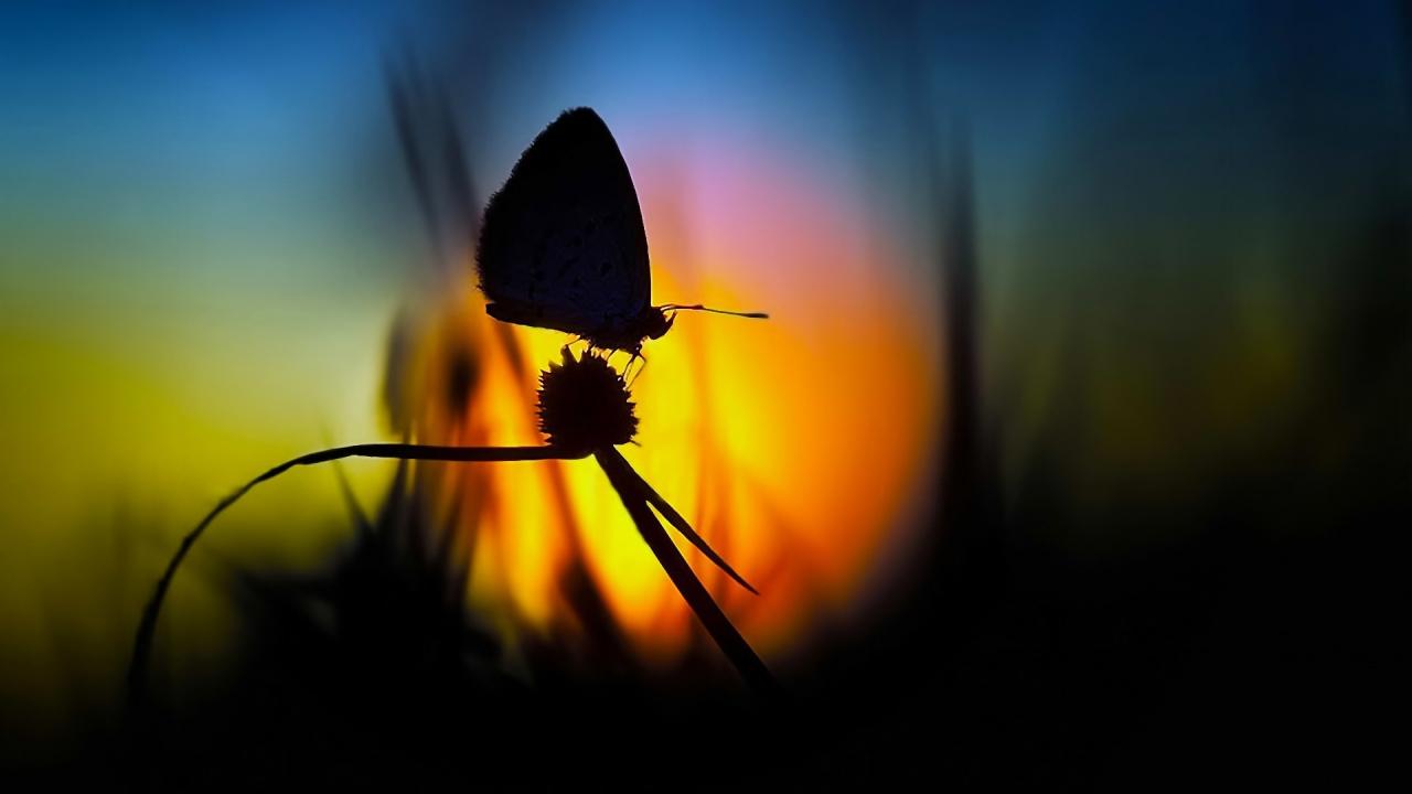 Foto de mariposa en contraluz - 1280x720