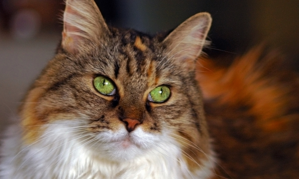 Gato ojos verdes - 1000x600