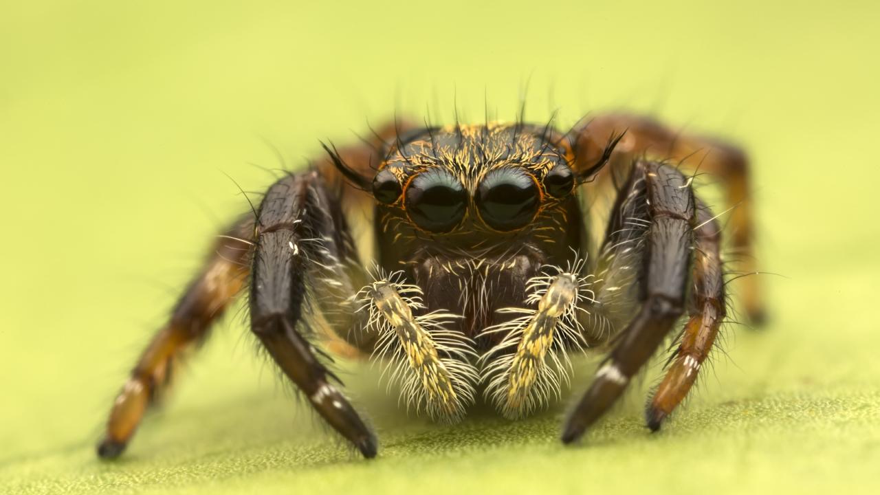 Insecto en macro - 1280x720