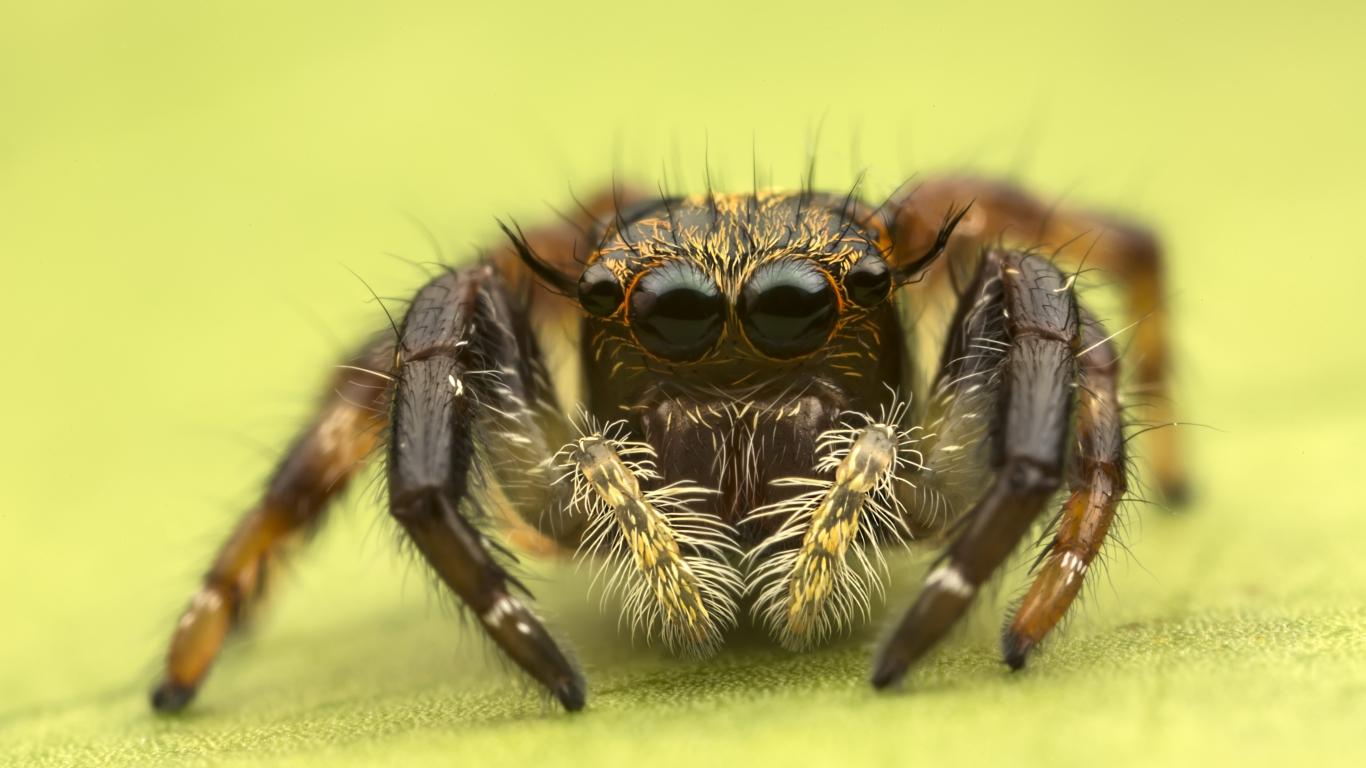 Insecto en macro - 1366x768