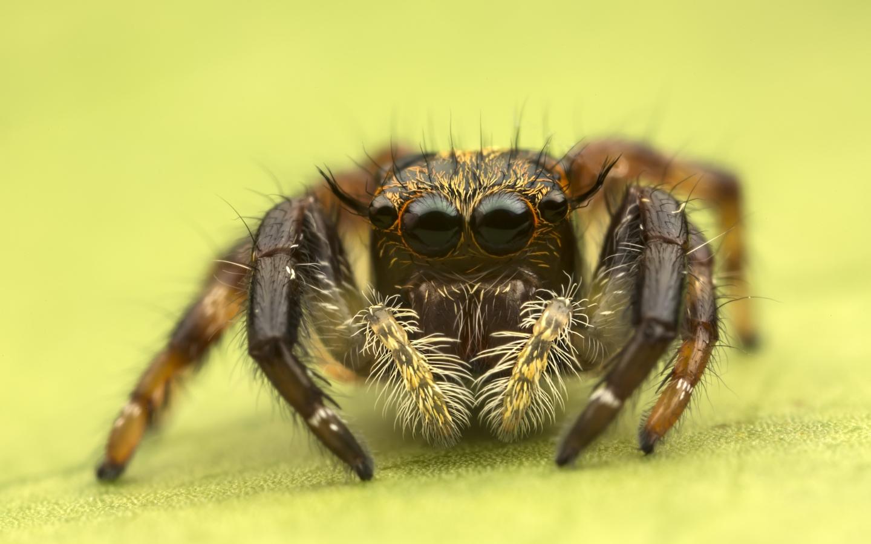 Insecto en macro - 1440x900