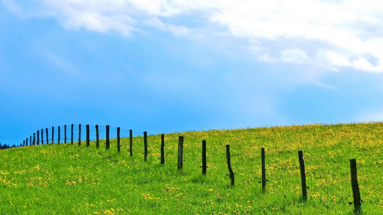 Jardines con flores y grass verde - 1280x720