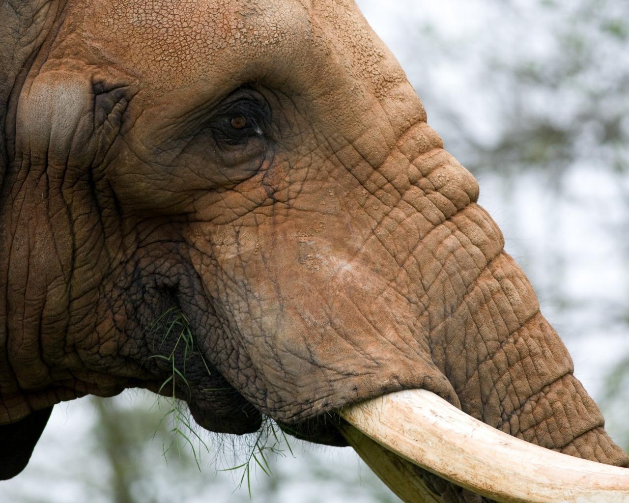La cabeza de un elefante - 1280x1024