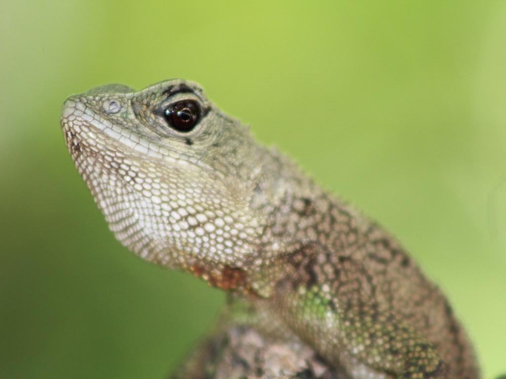 La cabeza de un reptil - 1024x768