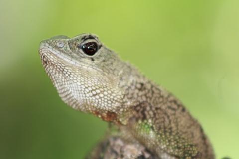 La cabeza de un reptil - 480x320
