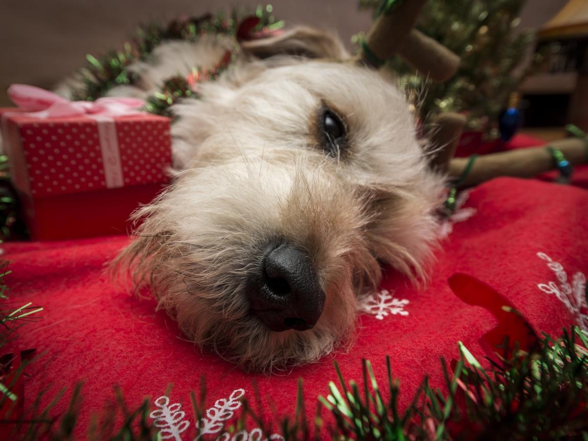 Perro navideño - 1152x864
