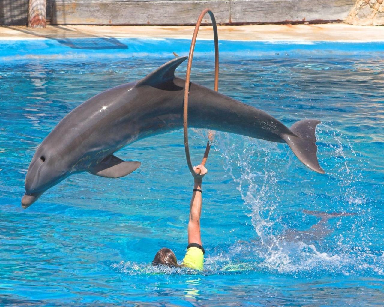 Saltos de delfines - 1280x1024