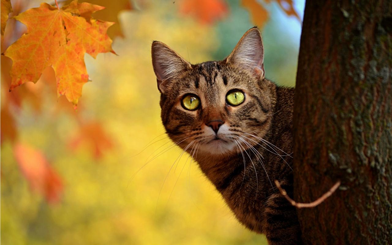 Un gato en un árbol - 1280x800
