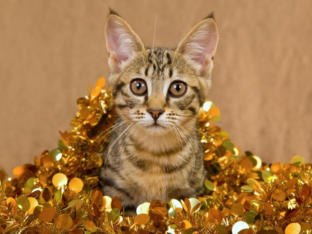Un gato muy bonito - 1024x768