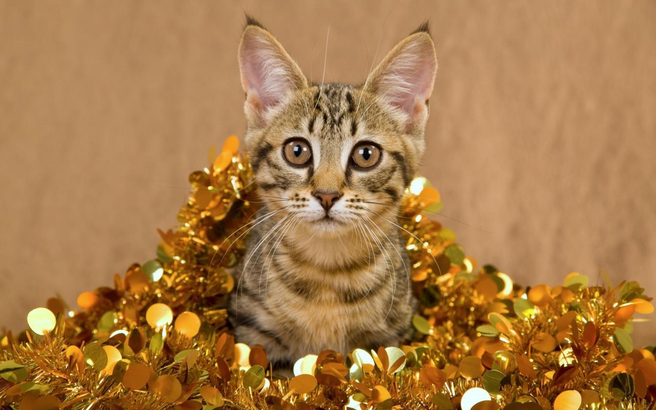 Un gato muy bonito - 1280x800