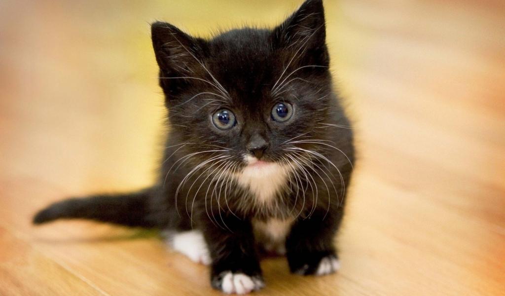 Un pequeño gato negro - 1024x600