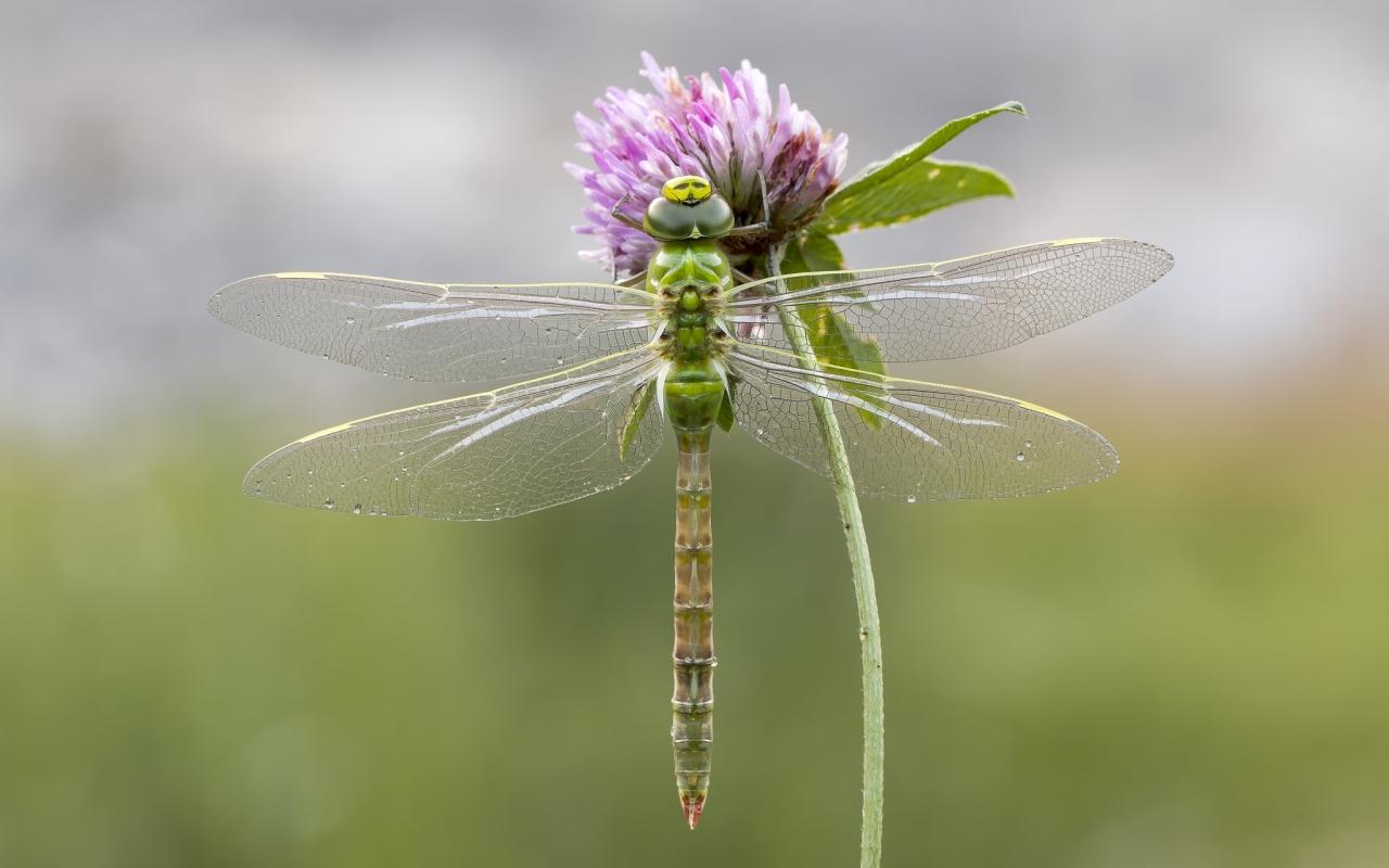 Una libélula - 1280x800