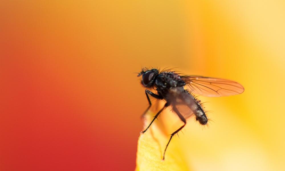Una mosca - 1000x600