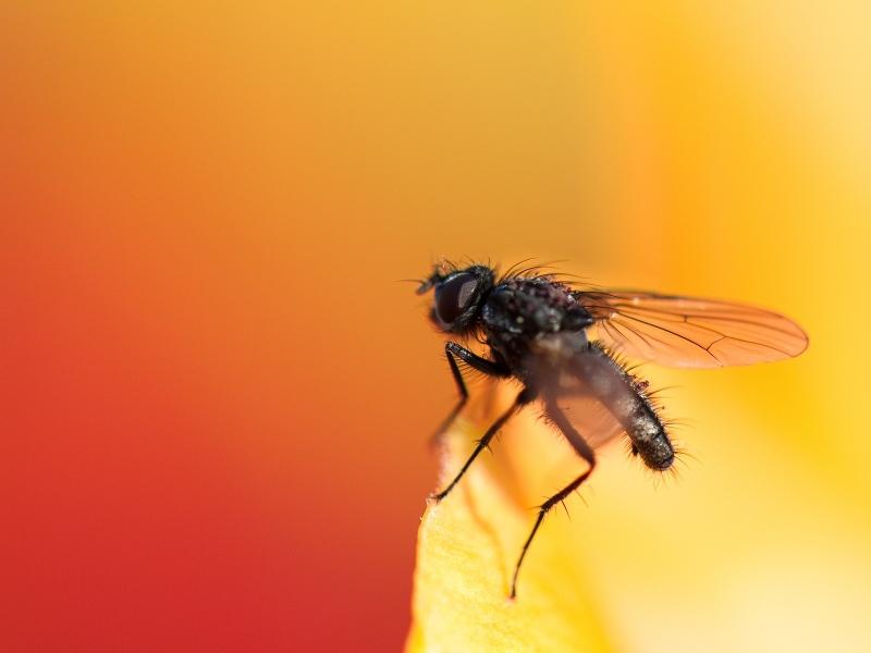 Una mosca - 800x600