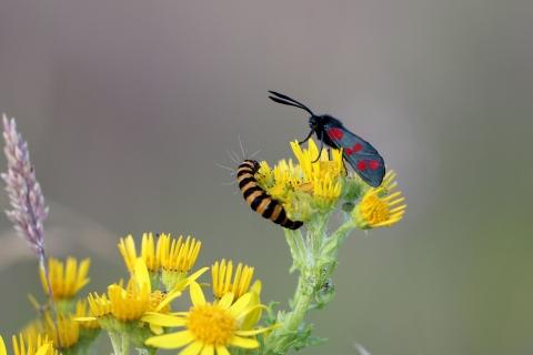 Una pareja de insectos - 480x320