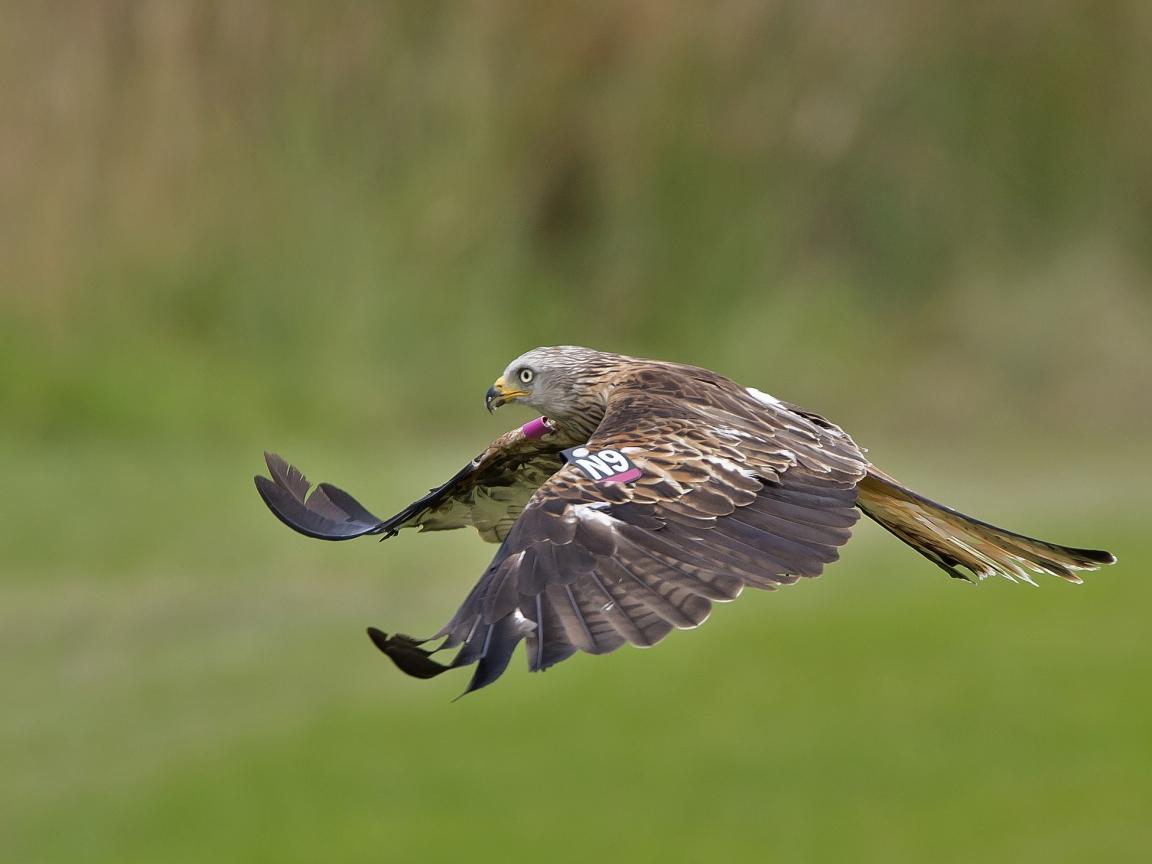 Vuelo de un Aguila - 1152x864