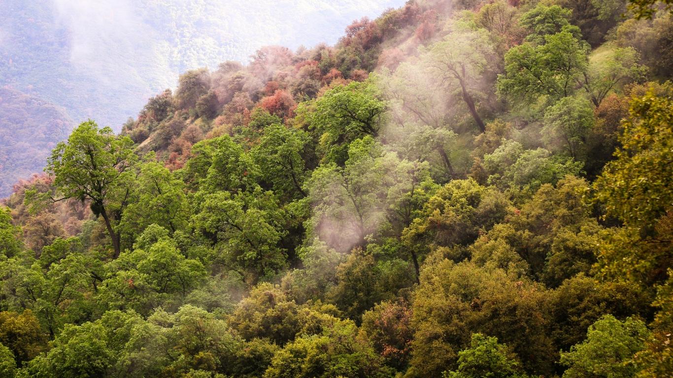 Arboles hermosos y nubes - 1366x768