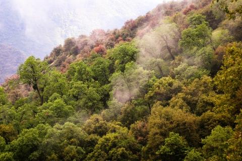 Arboles hermosos y nubes - 480x320