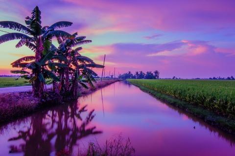 Puesta de Sol color Púrpura - 480x320