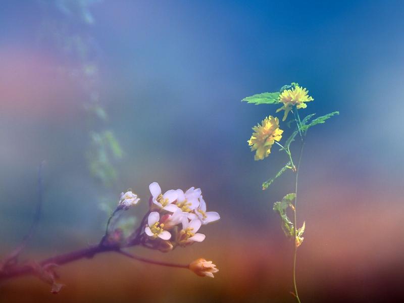 Tallo con flor amarilla - 800x600