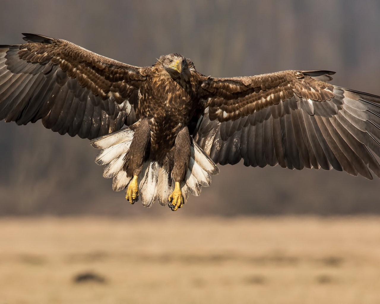 Un águila con las alas extendidas - 1280x1024