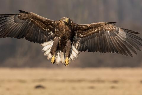 Un águila con las alas extendidas - 480x320