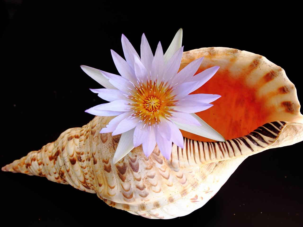 Una concha y una flor - 1280x960