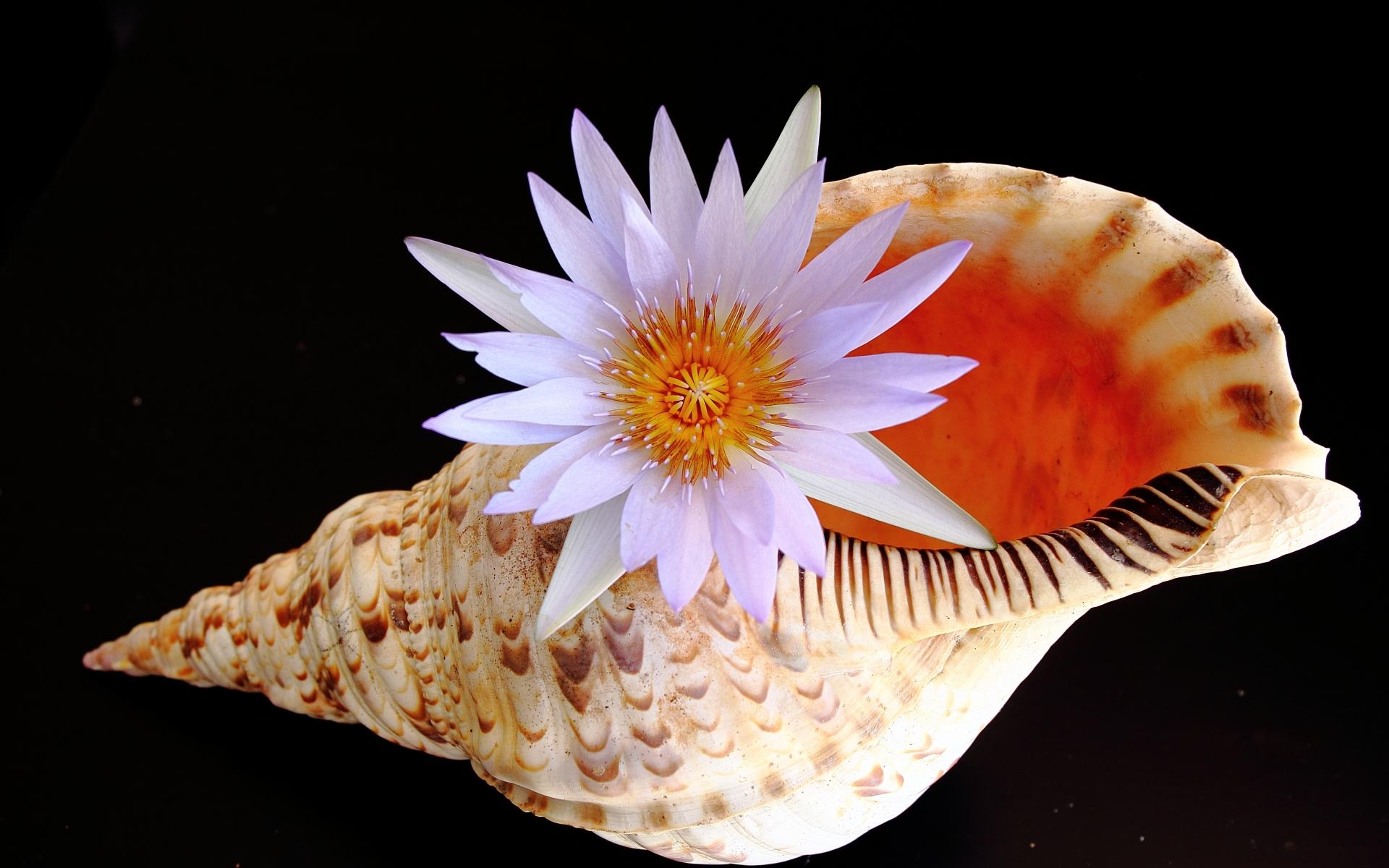 Una concha y una flor - 1920x1200