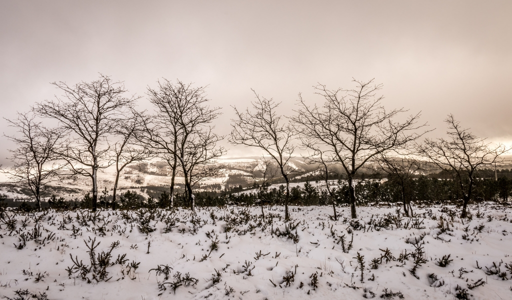 Otoño en las nieves - 1024x600