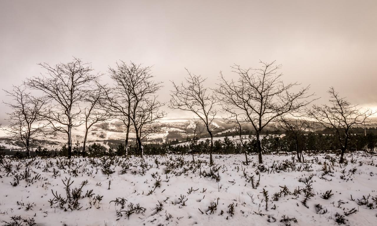 Otoño en las nieves - 1280x768