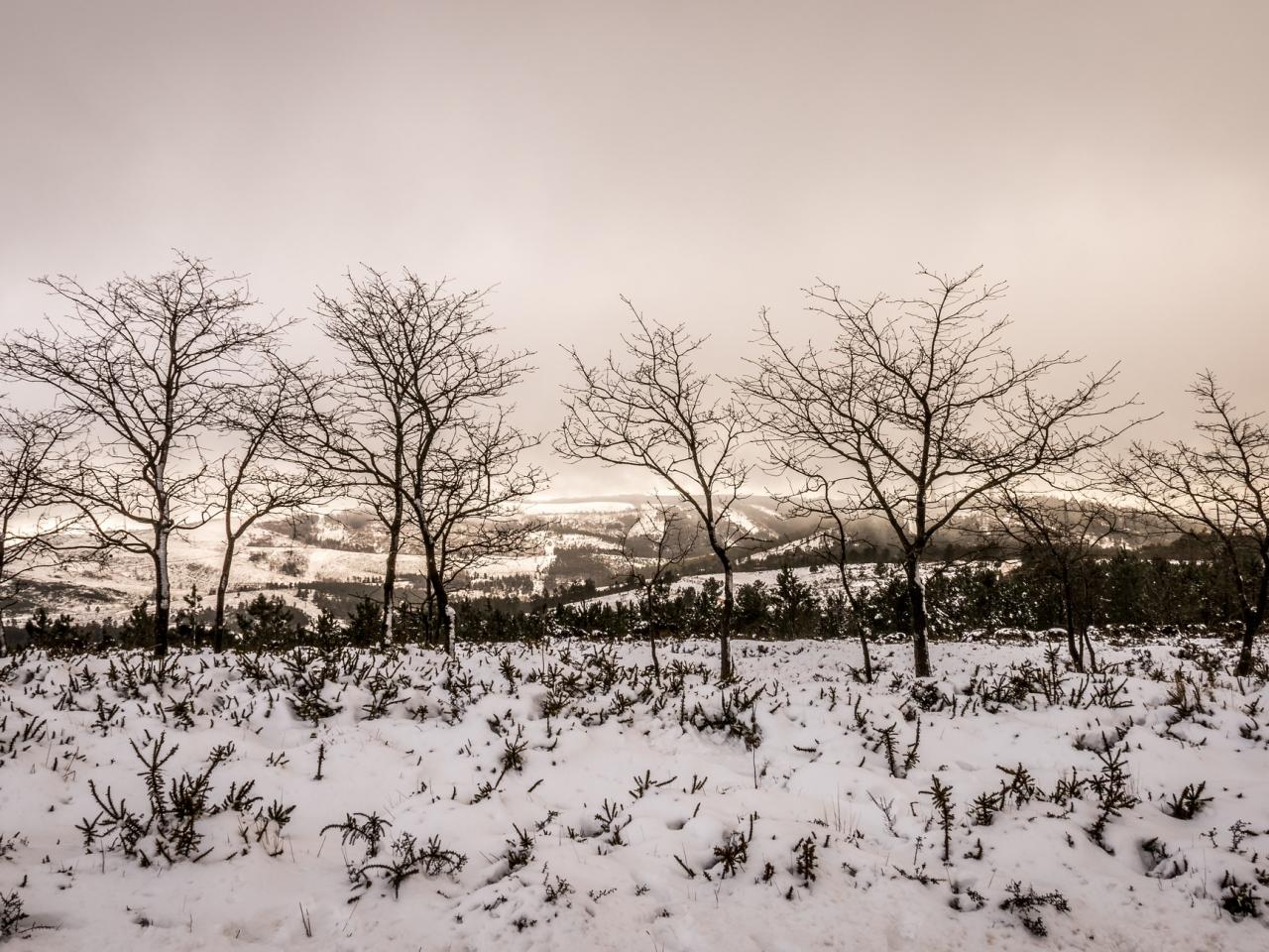 Otoño en las nieves - 1280x960