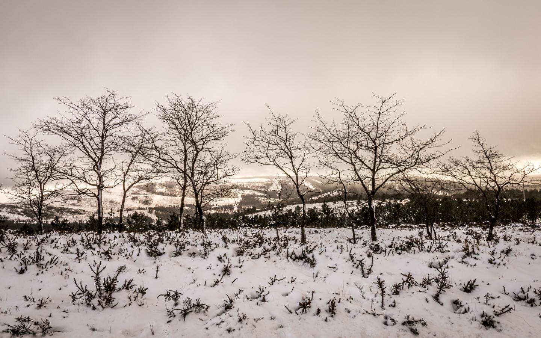 Otoño en las nieves - 1440x900