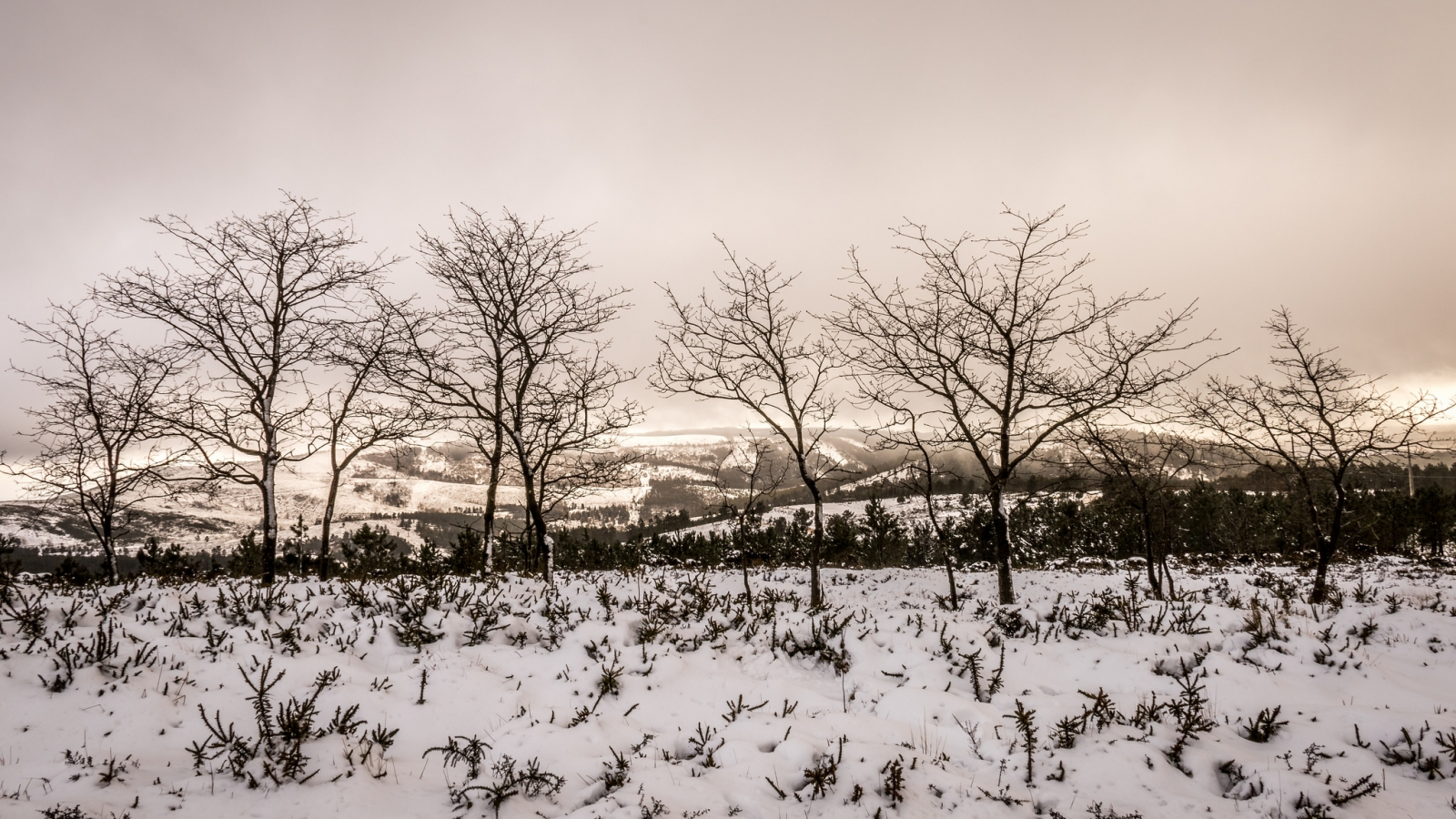 Otoño en las nieves - 1600x900