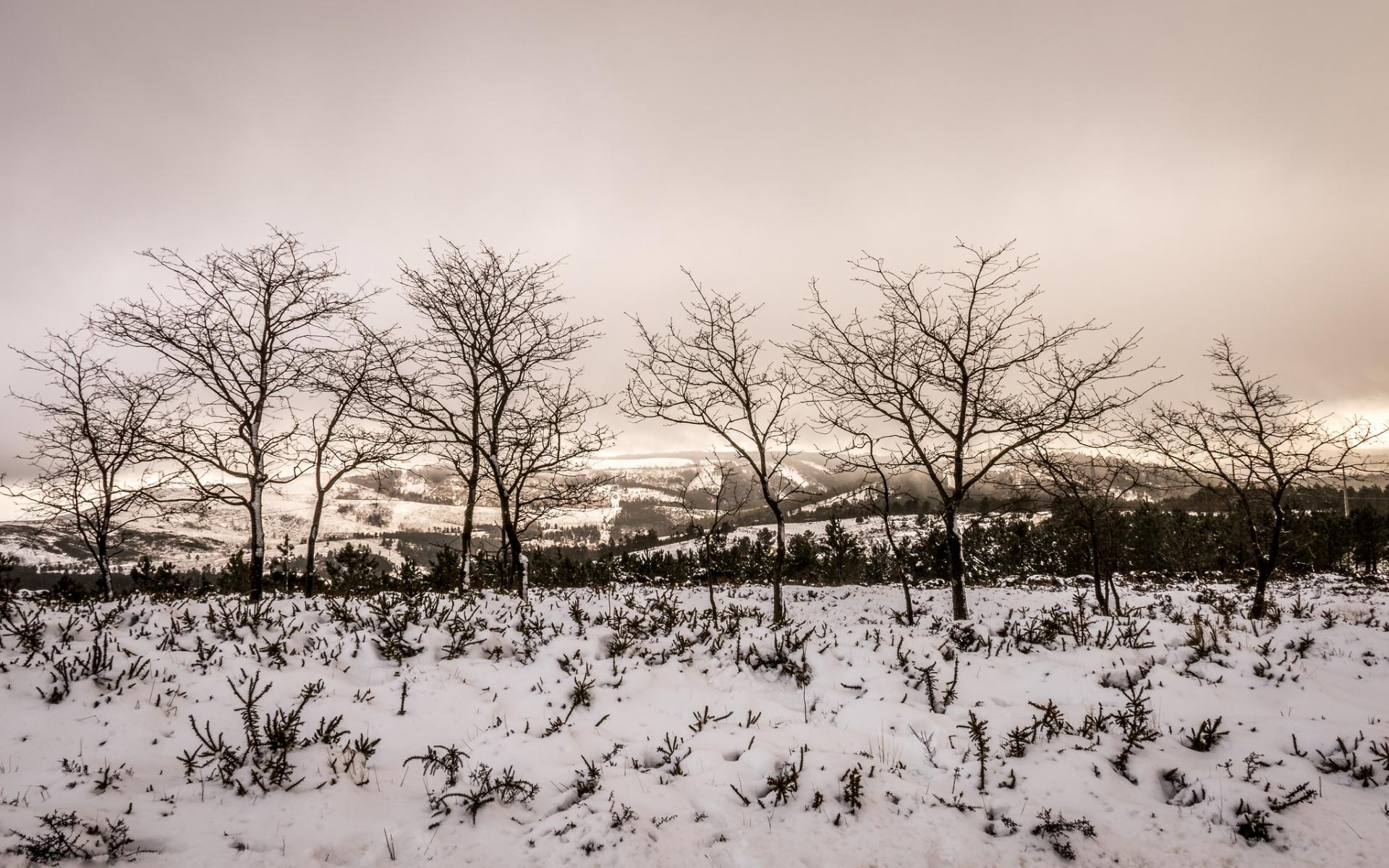 Otoño en las nieves - 1920x1200