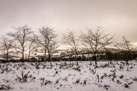 Otoño en las nieves - 480x320