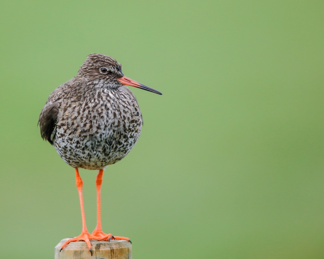 Aves hermosas - 1280x1024