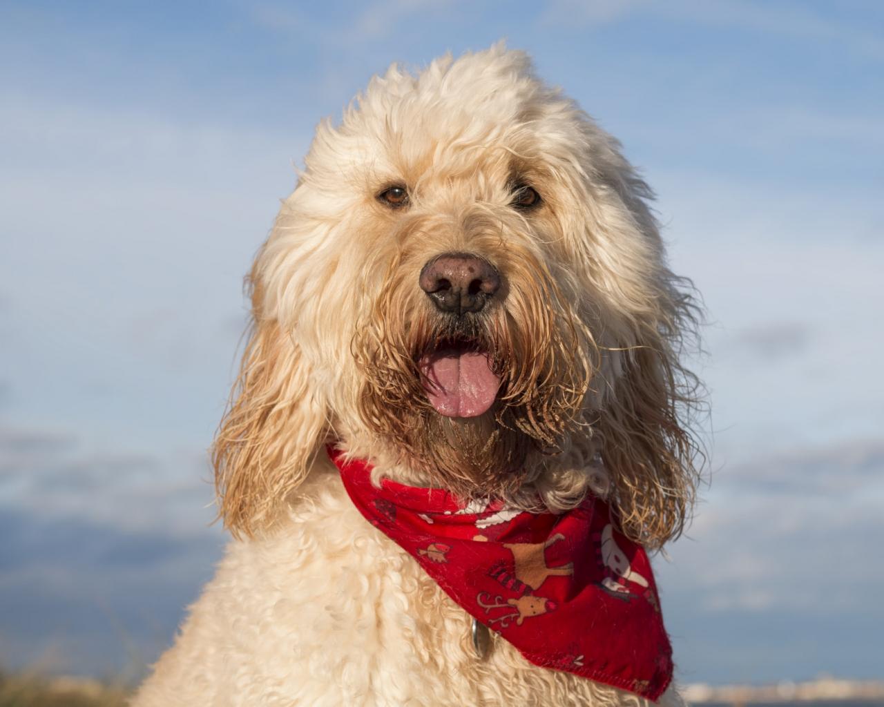 Fotografías de perros - 1280x1024