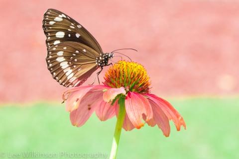 Mariposa en una flor rosada - 480x320