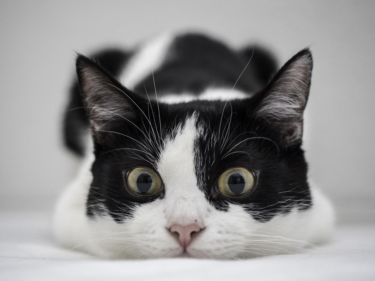 Un gato blanco y negro - 1280x960