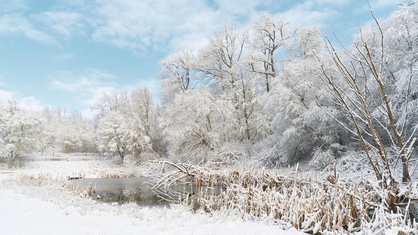 Invierno lleno de Nieve - 1366x768