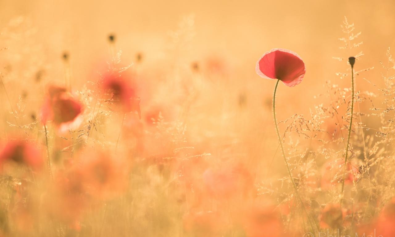 Paisaje con flores - 1280x768