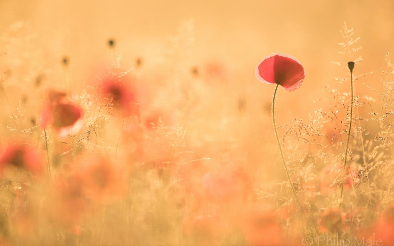 Paisaje con flores - 1280x800
