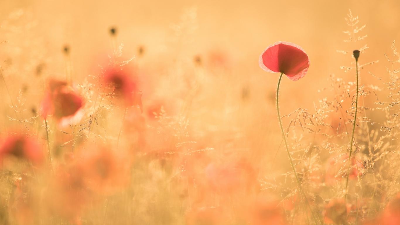 Paisaje con flores - 1366x768