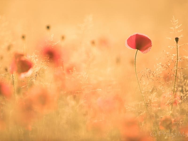 Paisaje con flores - 800x600