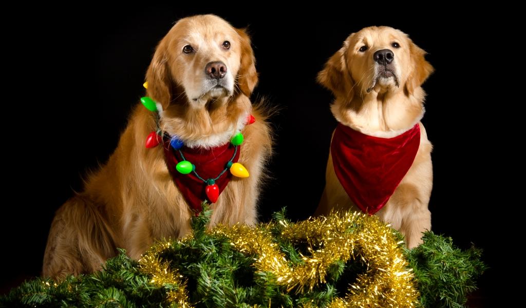 Perros con adornos Navidad - 1024x600