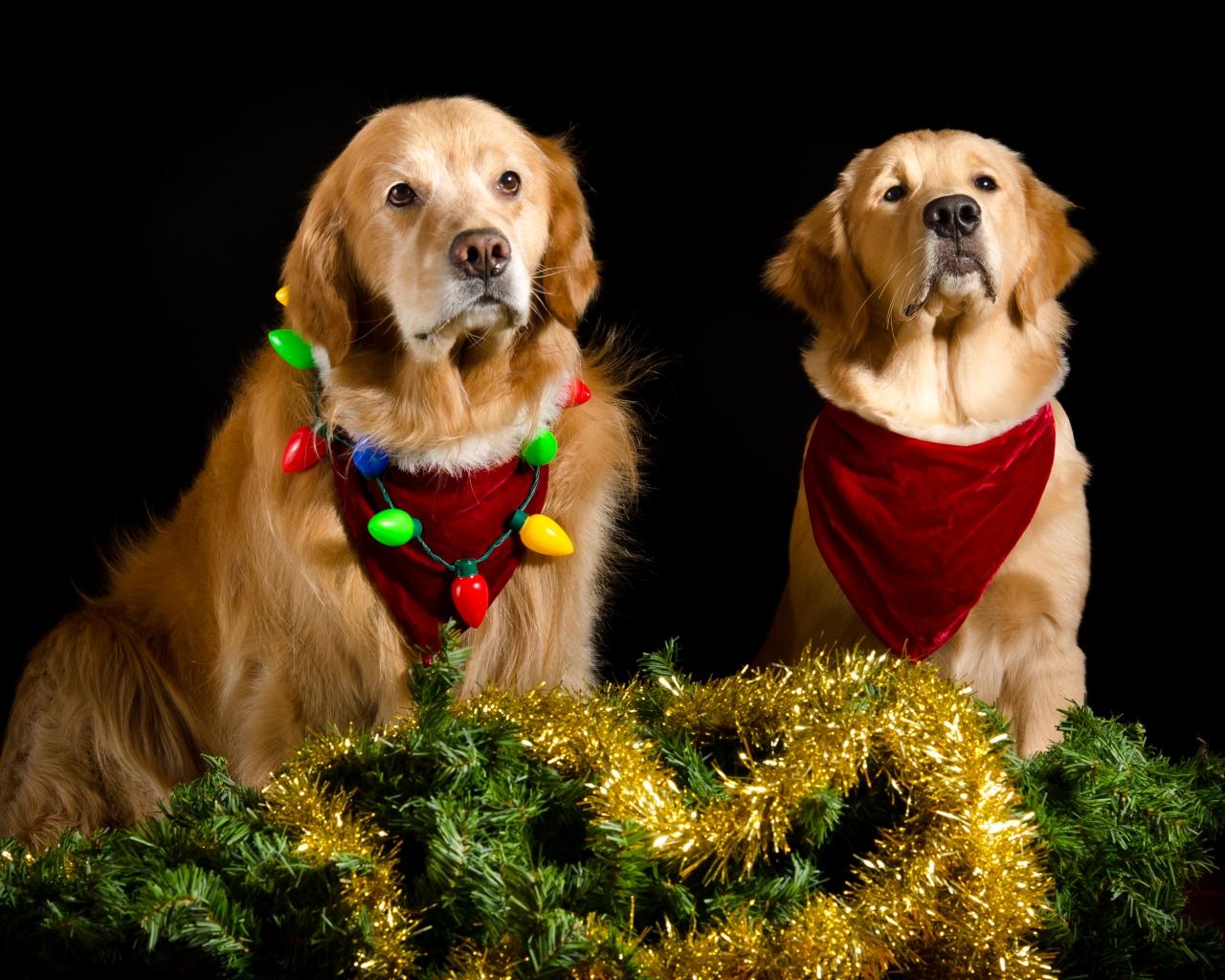 Perros con adornos Navidad - 1280x1024