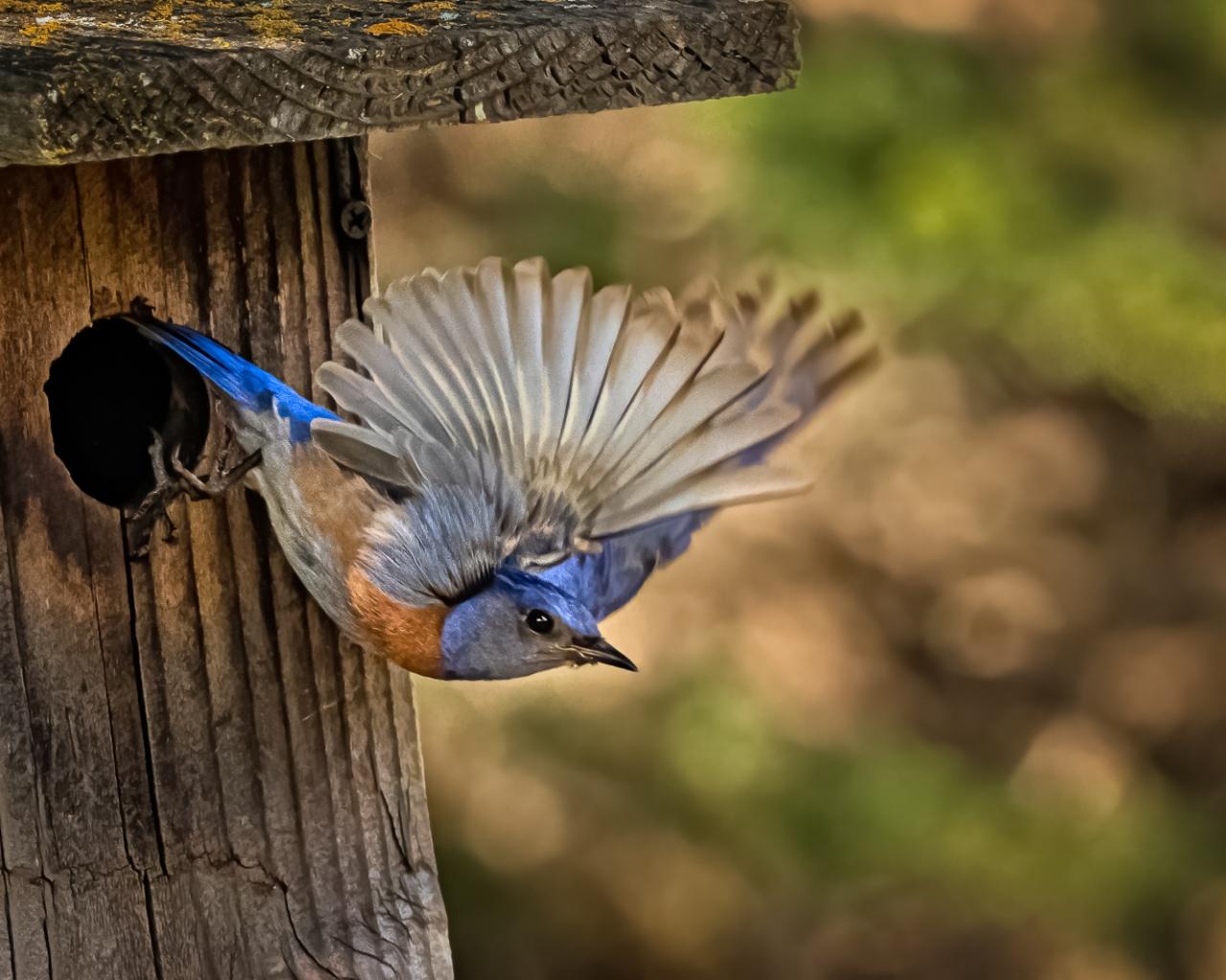 Pajaro saliendo de su nido - 1280x1024