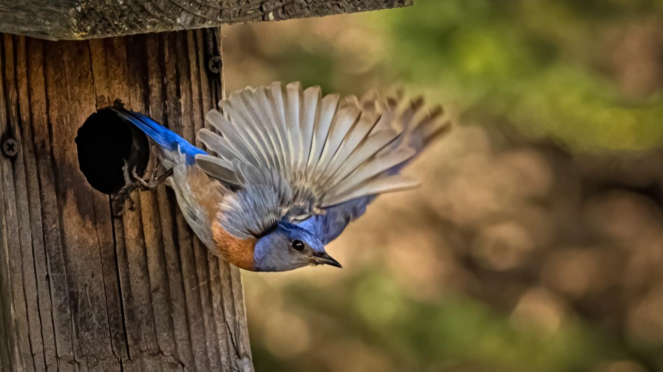 Pajaro saliendo de su nido - 1366x768