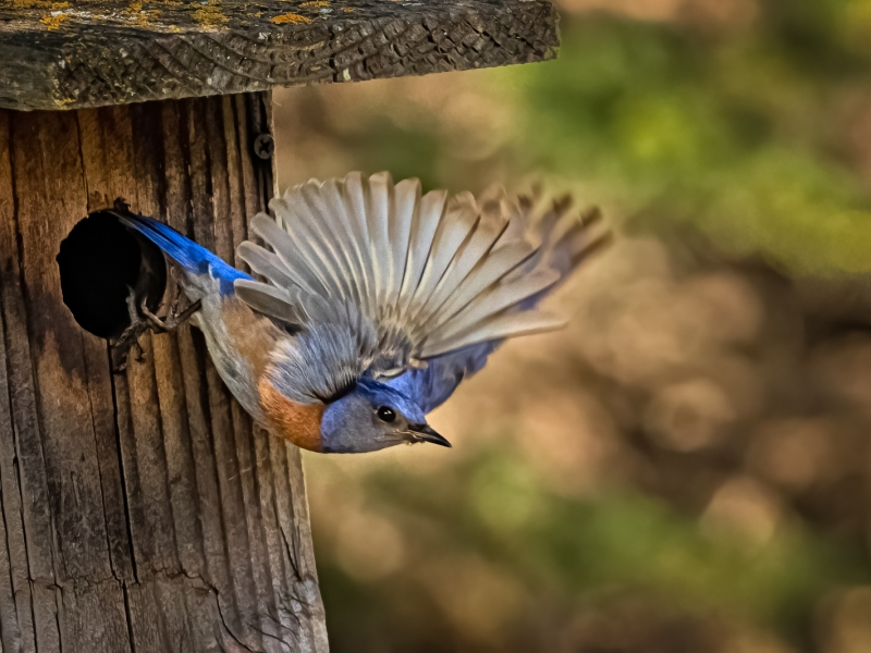 Pajaro saliendo de su nido - 800x600