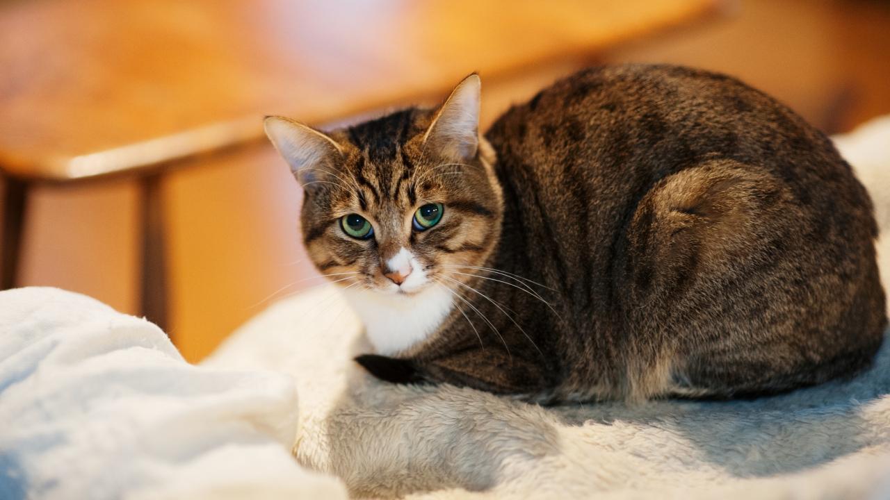 Un gato mirandote - 1280x720
